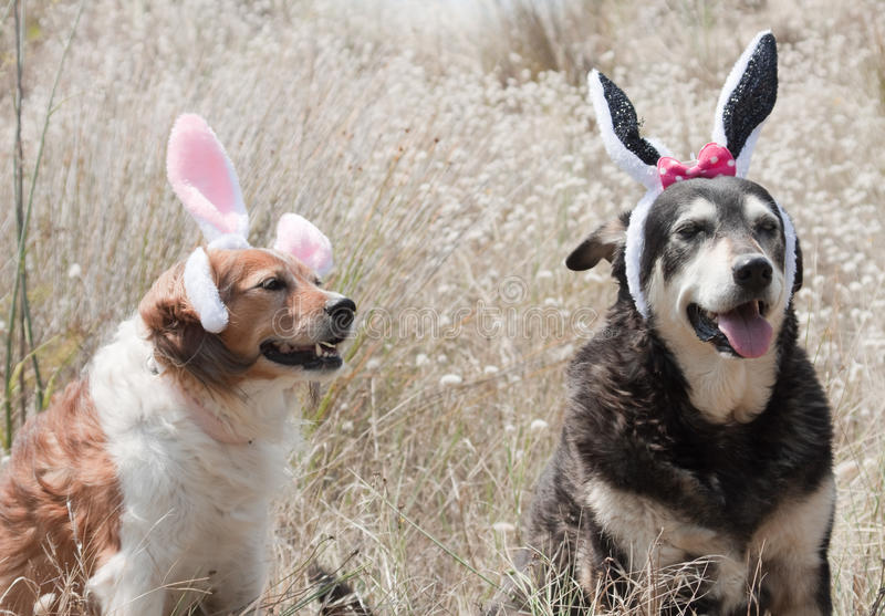 Easter bunnies ears stock image