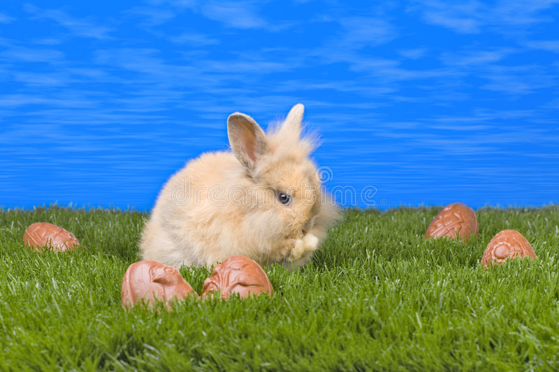 Download Easter bunny stock image. Image of spring, eggs, grass - 2147981
