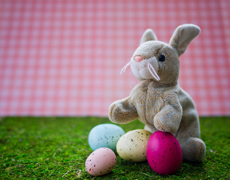 Download Easter Bunny stock image. Image of space, copy, animal - 23367133