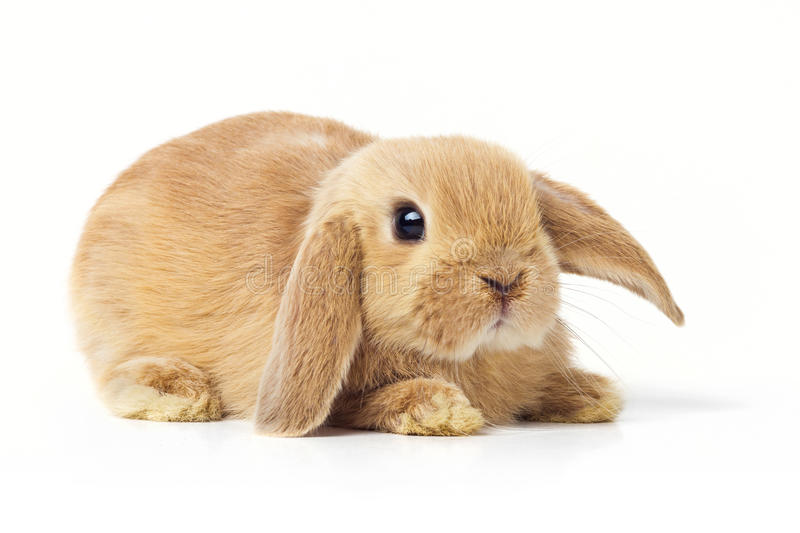 Easter Bunny. Cute Easter Bunny on a white background royalty free stock photo