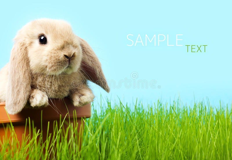 Easter bunny. Baby Easter bunny on spring green grass stock photos