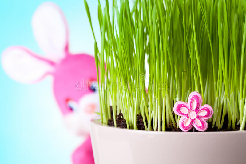 Easter Bunny. Easter rabbit sitting behind the grass with his face to camera. Focus on pink flower stock photo