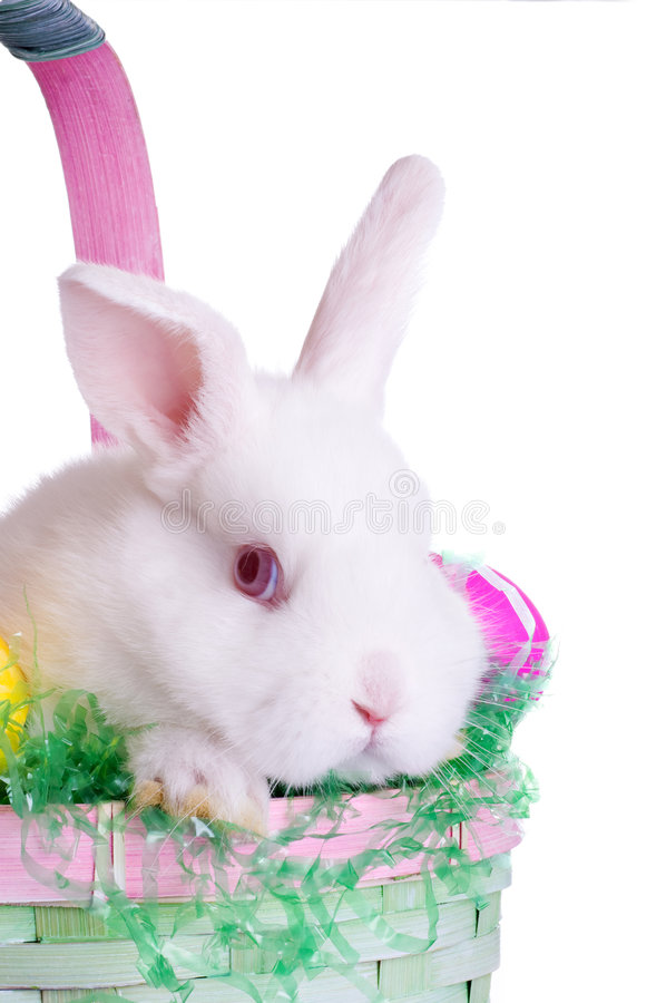 Easter Bunny. Baby Easter Bunny in a Basket royalty free stock image