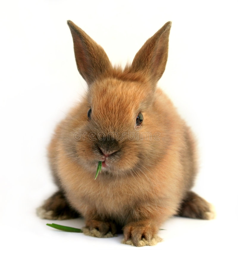 Easter bunny. Cute easter bunny eating grass stock images