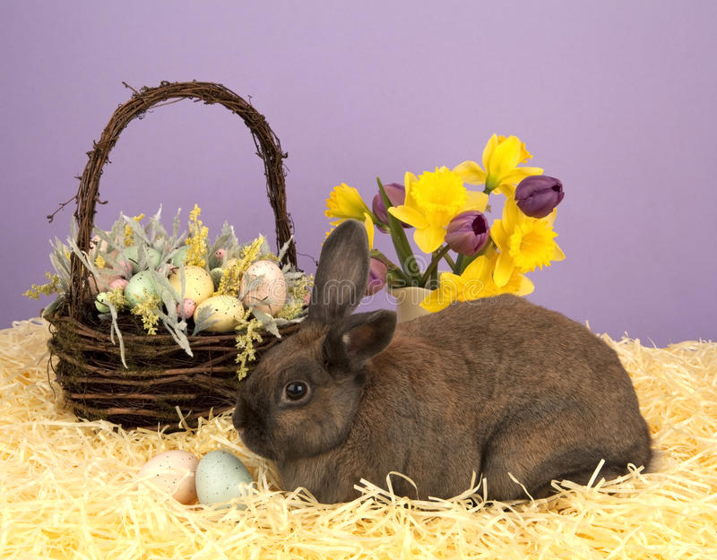 Easter bunny and basket royalty free stock photo