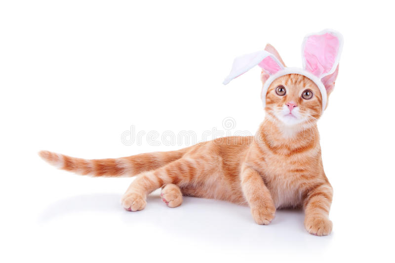 Easter Bunny. Easter cat in bunny ears royalty free stock photo