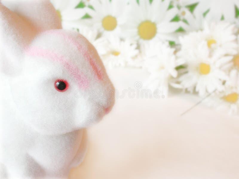 Easter bunny among daisies royalty free stock photos