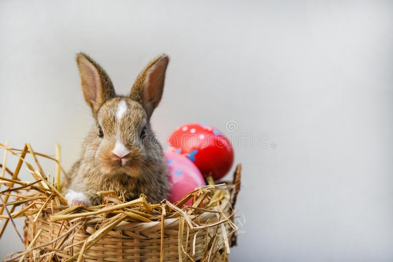Easter bunny and Easter eggs on gray background Colorful eggs in the nest basket and little rabbit sitting stock photos