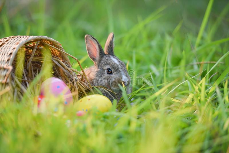 Easter bunny and Easter eggs on green grass outdoor Colorful eggs in the nest basket and little rabbit royalty free stock photos