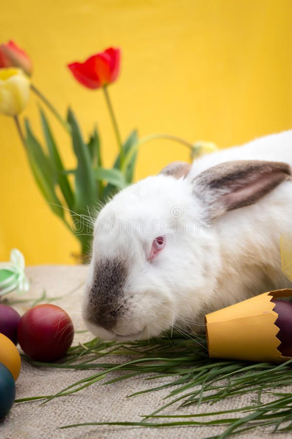 Easter bunny with Easter eggs and yellow basket royalty free stock image