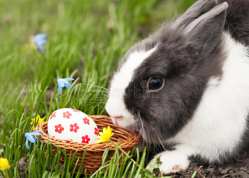 Easter Bunny eggs found in a small basket royalty free stock images