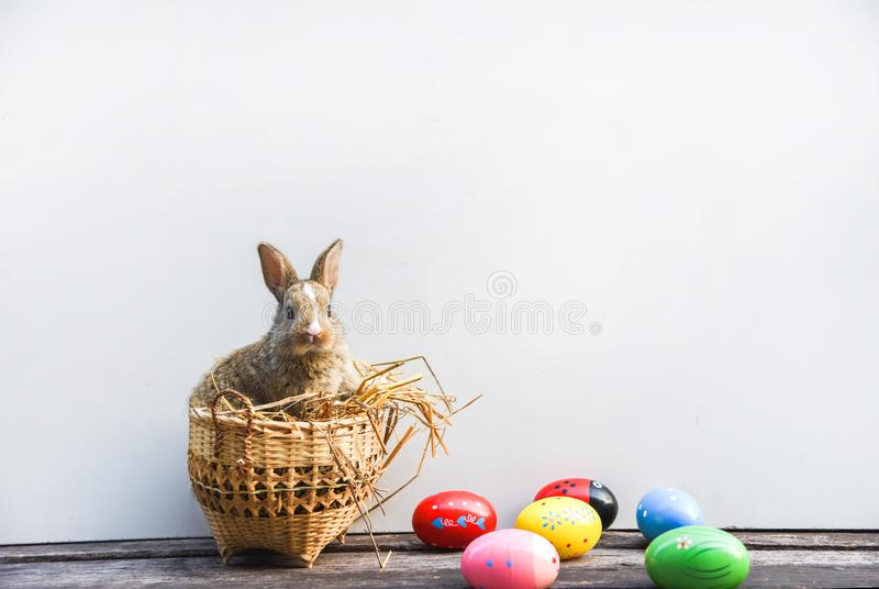 Easter bunny and Easter eggs on gray background royalty free stock photography