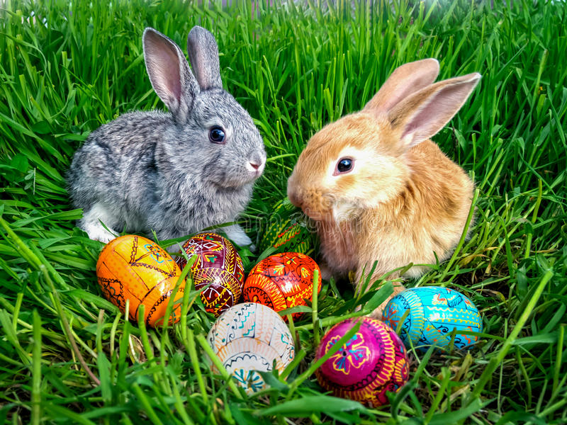 Easter bunny with eggs on green grass royalty free stock photos