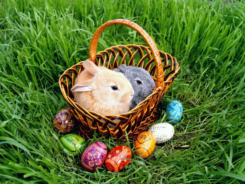 Easter bunny eggs on green grass royalty free stock image