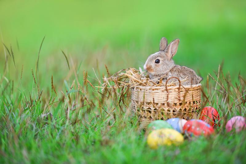 Easter bunny and Easter eggs on green grass outdoor / Little brown rabbit sitting basket royalty free stock photography