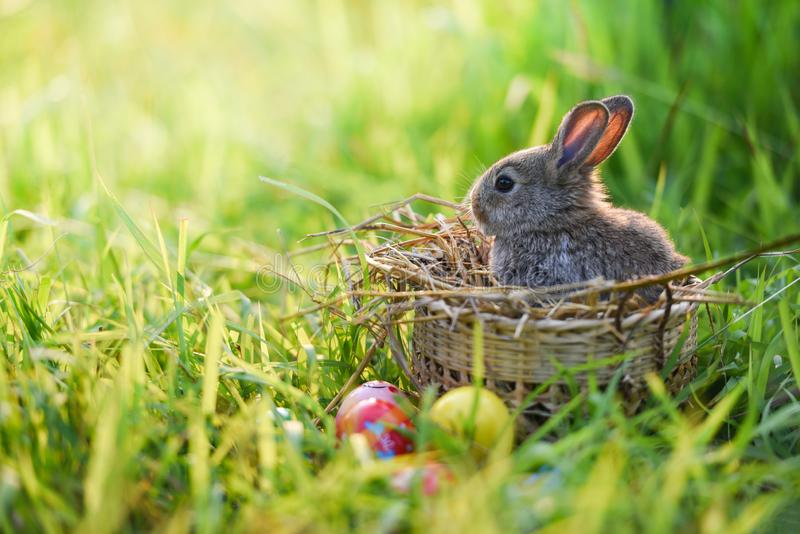 Easter bunny and Easter eggs on green grass outdoor / Little brown rabbit royalty free stock image