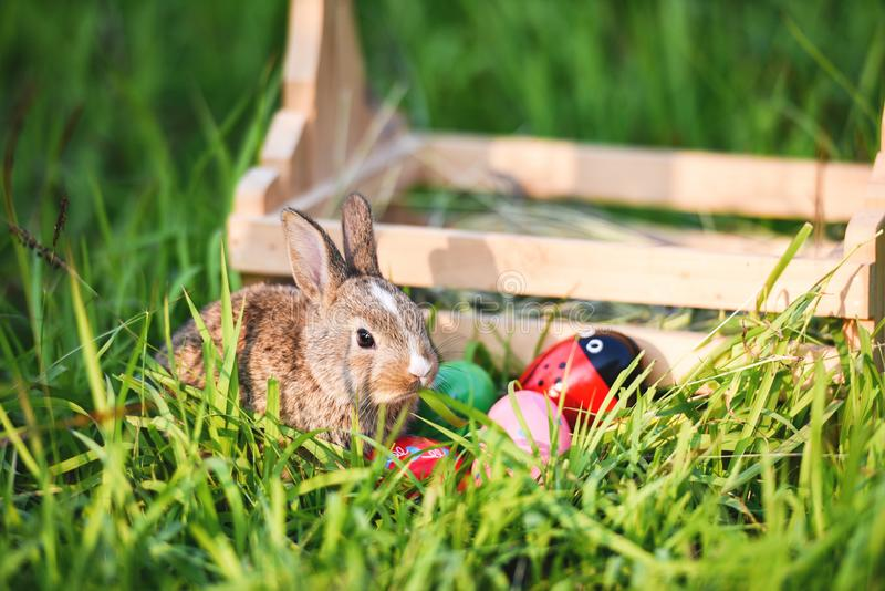 Easter bunny and Easter eggs on green grass outdoor / Little brown rabbit sitting wooden basket royalty free stock photos