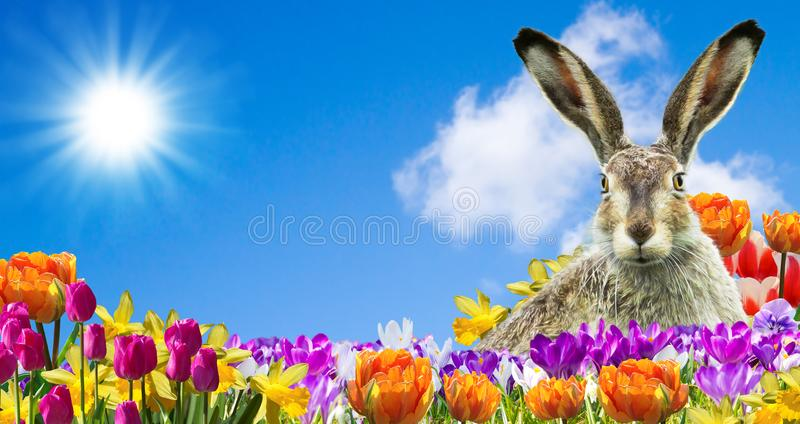 Download Easter bunny in the garden stock image. Image of gift - 113140347
