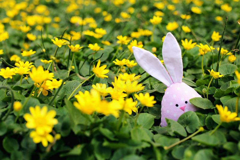 Easter bunny hidden on a flower meadow, yellow spring flowers on a meadow of green grass. Concept spring, ears hare royalty free stock photos