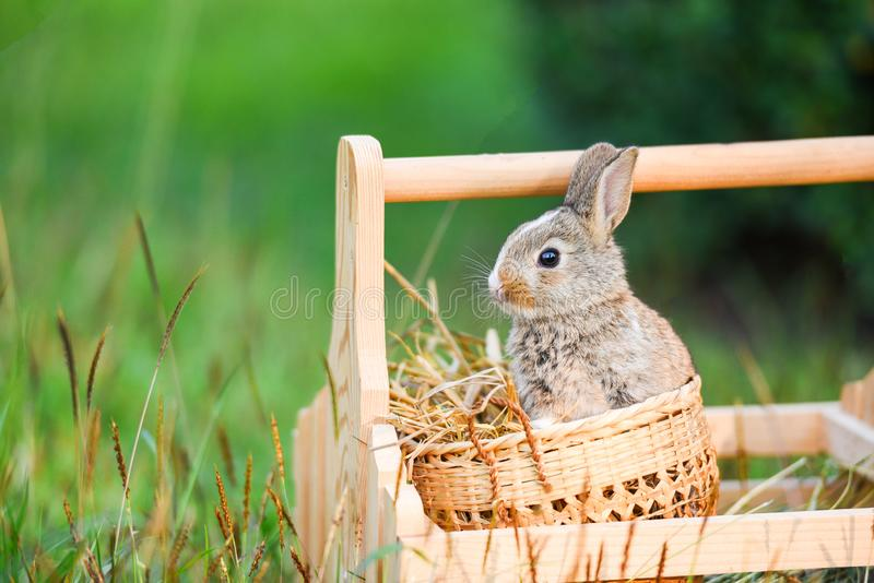 Easter bunny hunt for easter egg on flower grass and outdoor nature background royalty free stock images