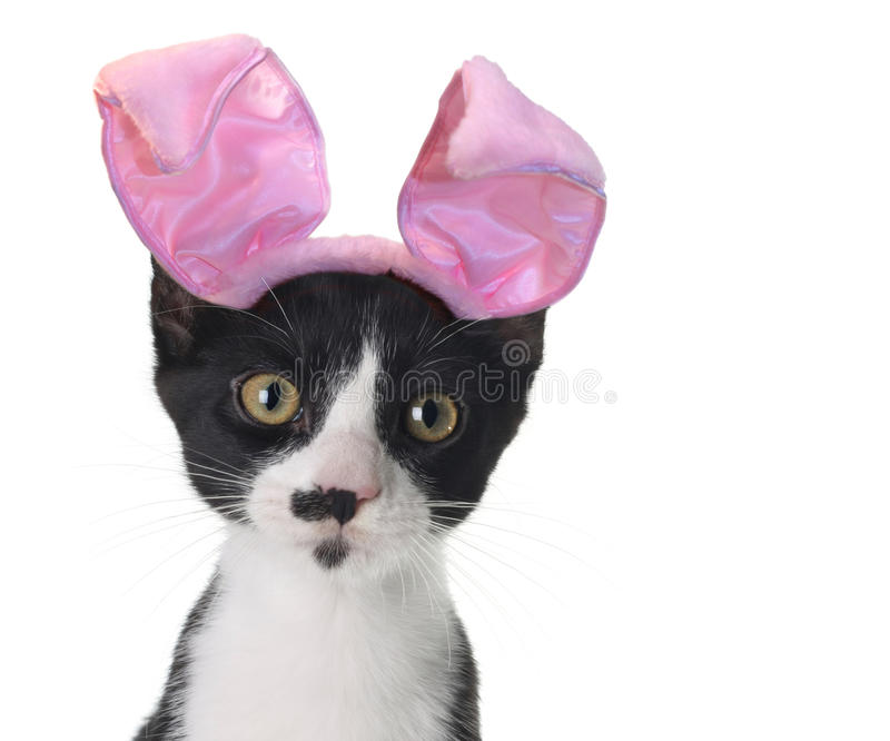 Easter bunny kitten. Funny black and white kitten wearing pink Easter bunny ears royalty free stock photo