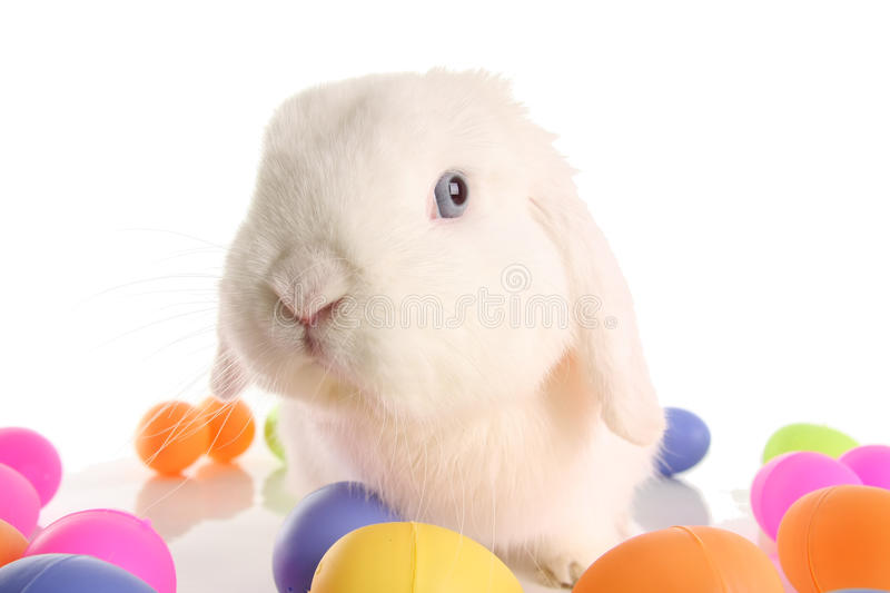 Easter bunny rabbit. Cute bunny rabbit surrounded by easter eggs stock photos