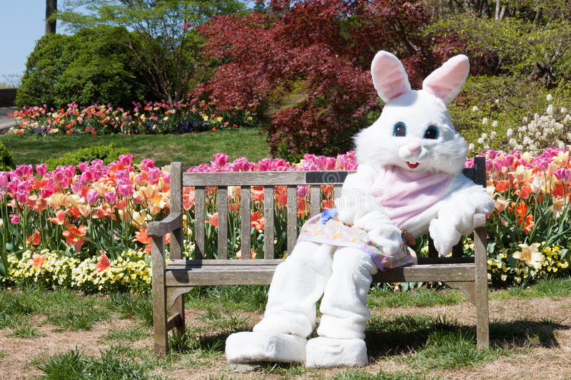 Download Easter bunny with tulips stock photo. Image of easter - 43188470