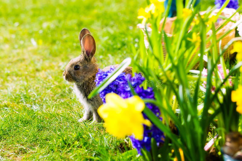 Download Easter Bunny Waiting On Meadow Stock Photos - Image: 28876023