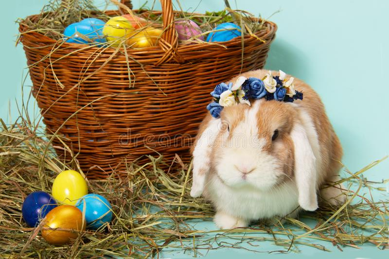 Easter bunny wreath of flowers and colorful eggs on hay in basket on tiffany blue background. stock images