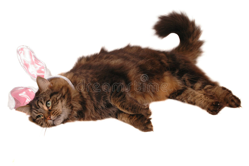 Easter Cat Royalty Free Stock Photos