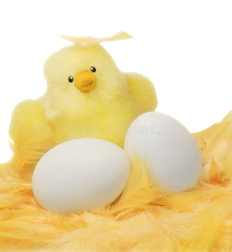 Download Easter chick and eggs stock image. Image of cuddly, tender - 23560459