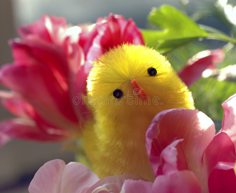 Easter chick & spring flowers royalty free stock photo