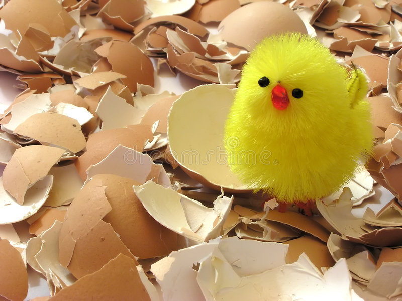 Easter chicken. Easter yellow chicken on eggs shells, eastern table royalty free stock photography