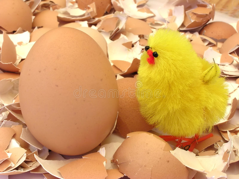 Easter chicken. Easter yellow chicken on eggs shells, eastern table stock photos