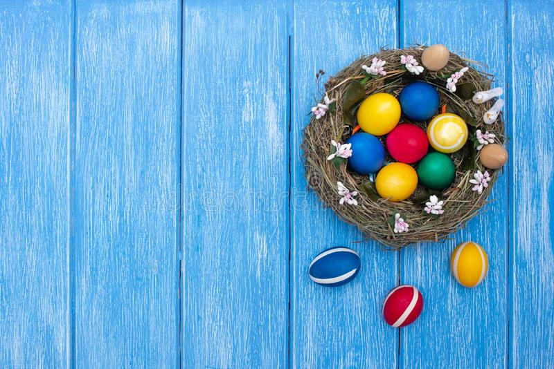 Easter chicken colorful eggs lie in a nest on a wooden blue background, Easter holiday, copy space stock photography