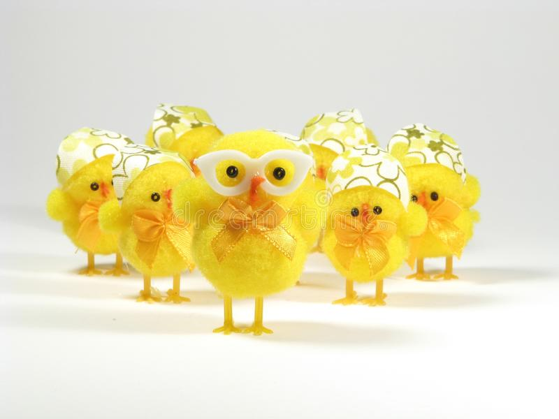 Easter chicken family stock image