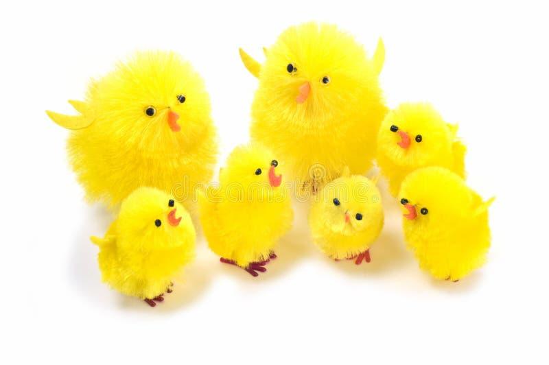 Easter Chicks Stock Image