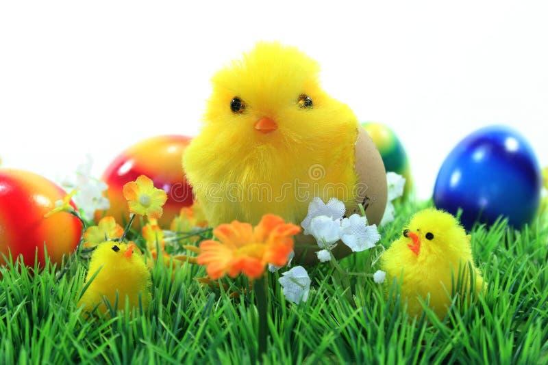Easter Chicks stock photos