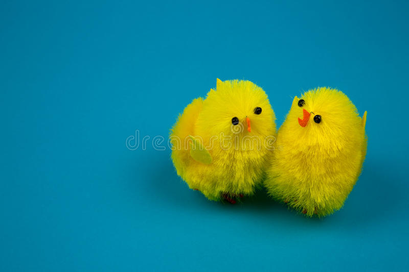 Easter chicks on blue background stock photo