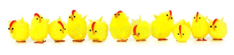 Easter chicks border stock photography
