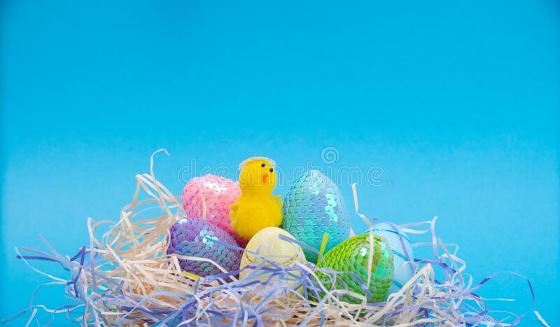 Easter Chicks and Eggs in Nest.concept of the Easter holiday and greeting cards. decorative chickens with Easter. Eggs stock images