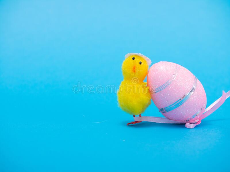 Easter Chicks and Eggs in Nest.concept of the Easter holiday and greeting cards. decorative chickens with Easter. Eggs stock photo