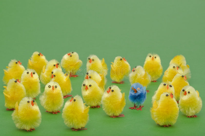 Easter chicks the odd one out stock image