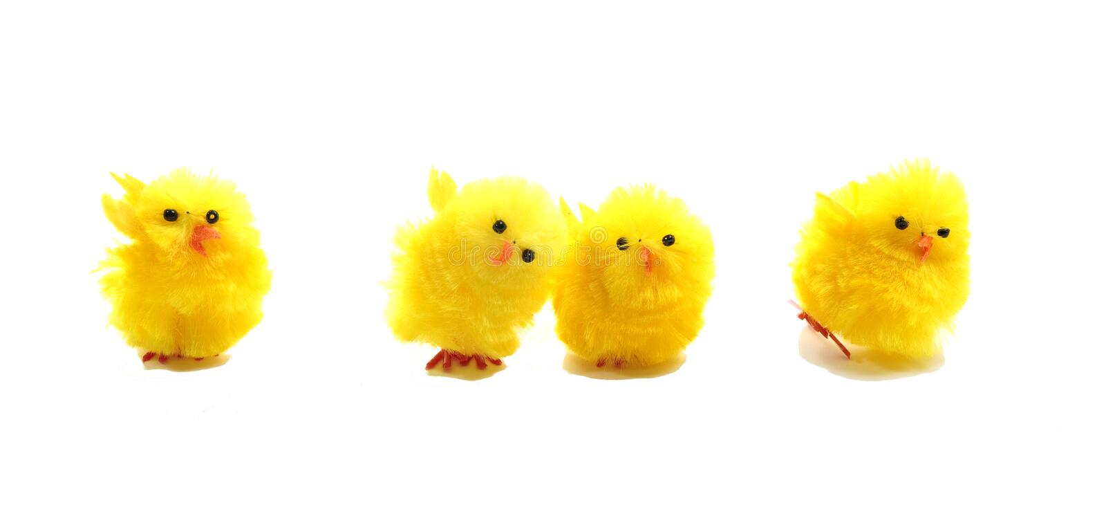 Easter chicks on white royalty free stock photo