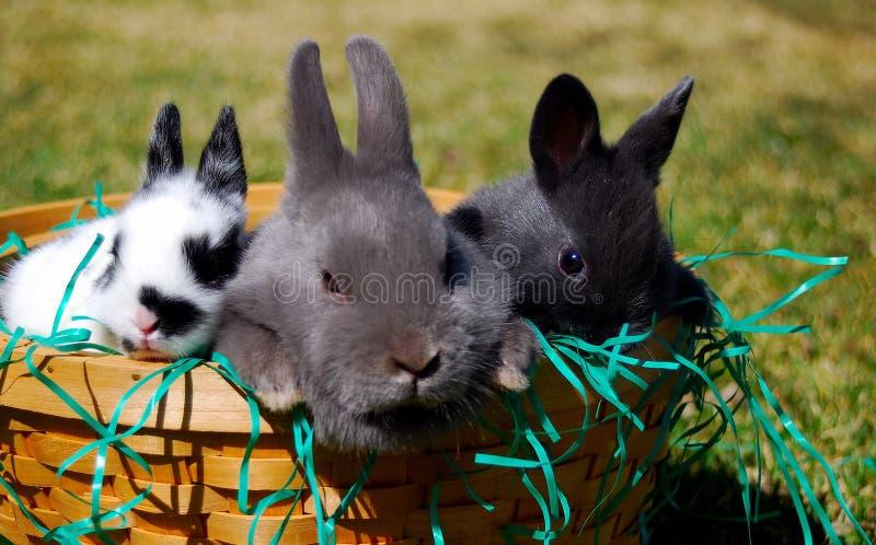 Easter? Coelhos fotos de stock