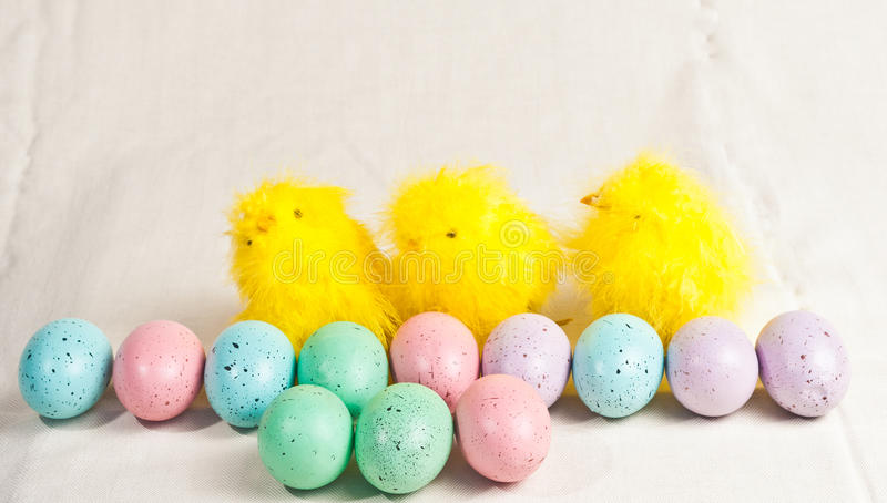 Easter colored eggs and three chicks stock images