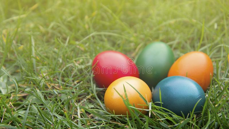 Easter colorful eggs in fresh green grass. Spring, easte holiday background with copy space stock photos