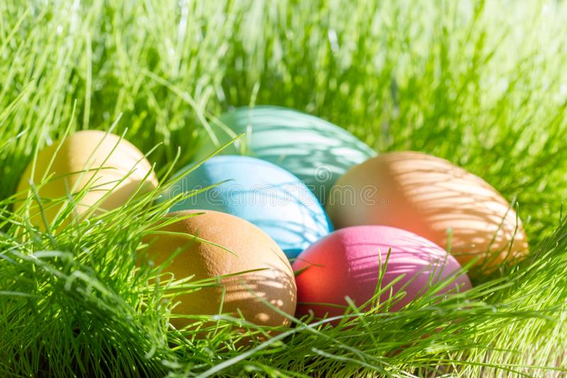 Easter colorful eggs in spring green grass in sunlight floral abstract background. Closeup royalty free stock images