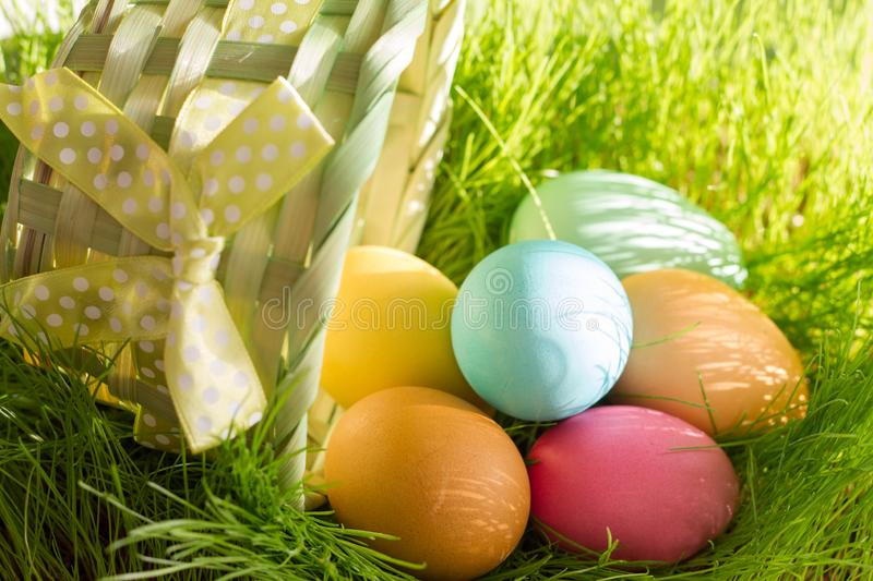 Easter colorful eggs in spring green grass in sunlight floral abstract background. Closeup stock photo