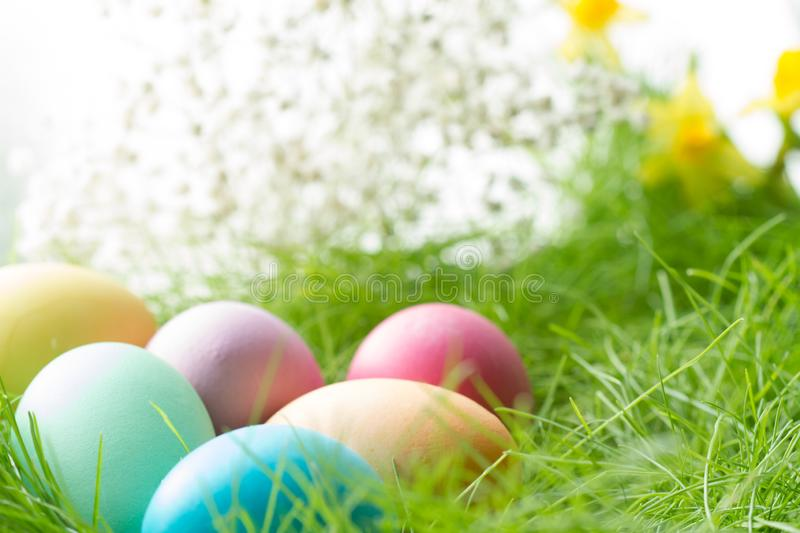Easter colorful eggs on spring meadow in sunlight floral abstract white green background. Closeup stock photography